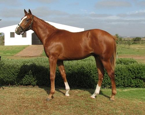 Champion Yearling