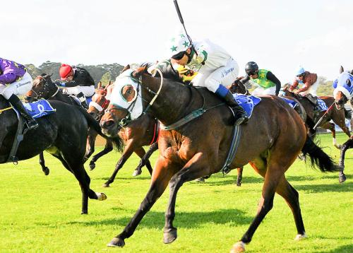 Thoroughbred Racer Lielums gives her best