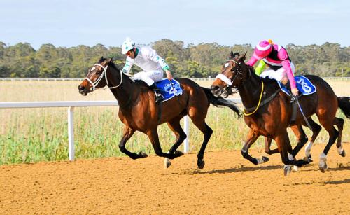 Favour champion thoroughbreds