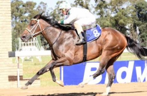 Sarve Thoroughbred horse racing