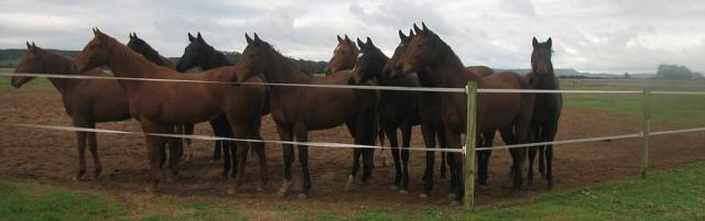 yearlings at favourstud
