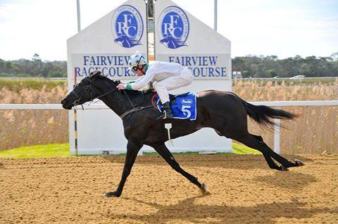 Top Favour Stud bred filly Favours Pride