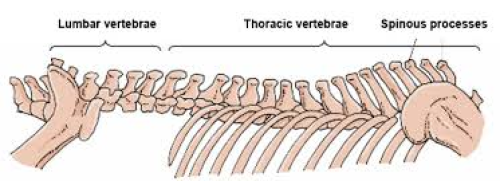 The horses spine without the rider