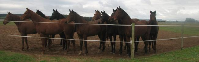 Favour Stud horse racing yearlings