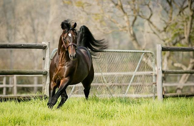 Potala Palace Stallion Synidicate out of Black Type Family