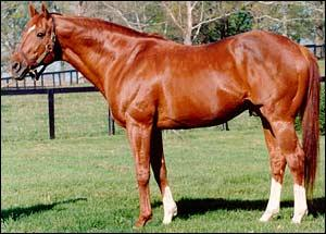 Secretariat considered to have the best conformation in a Thoroughbred Race horse