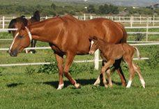Elusive Fort filly out of Fit and Firing