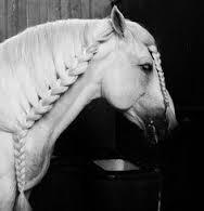 Braiding in horses