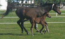 Thoroughbred Foals on Favourstud