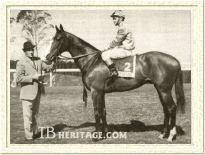 Sea Cottage Thoroughbred Race Horse