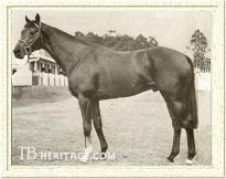 Hawaii Champion Thoroughbred Race Horse