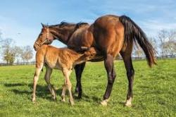 Healthy diets for healthy mares and foals