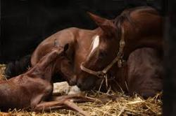 Thoroughbred mare with healthy foal