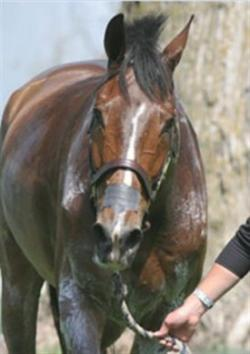 Sweating is often a sign of distress and pain in horses