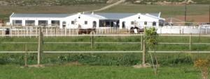 Stables and Paddocks at Favourstud