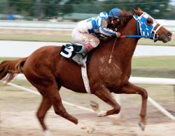 Secretariat Thoroughbred Racer
