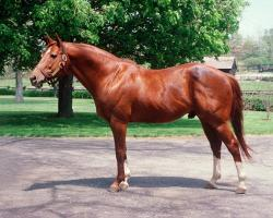 Secretariat As Breeding Stallion