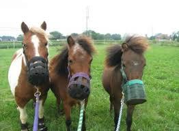 Horses and muzzles