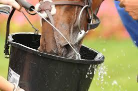 Handy hints horse drinking