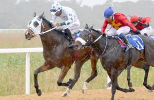 Savhara wins the polytrack