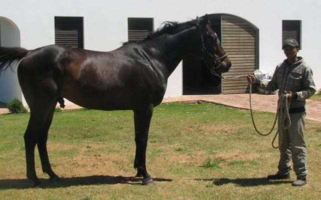 Harry Hall Thoroughbred racing Stallion on Favourstud