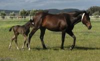 Breeding mare and foal on Favourstud