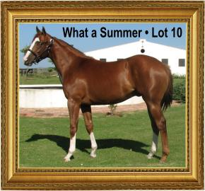 Lot 10 at the Cape Premier Yearling Sales 2016 What a Summer