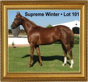 Supreme Winter  - Lot 101 Cape Premier Yearling Sales.