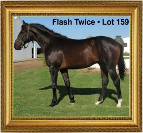 Flash Twice Lot 159 - Cape Premier Yearling Sales 2016
