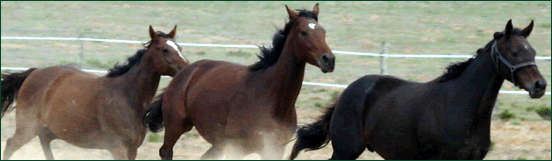 Favour Stud Mares Running